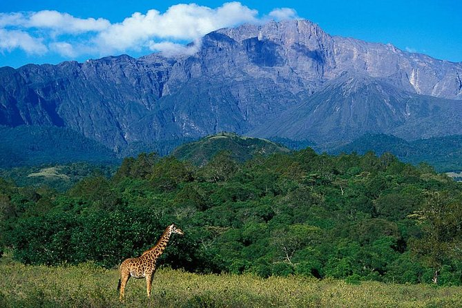 1 Day Joined Group Safari in Arusha National Park