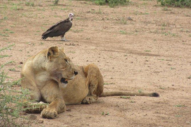 6 Days Living Among the Lions Safari Experiences.
