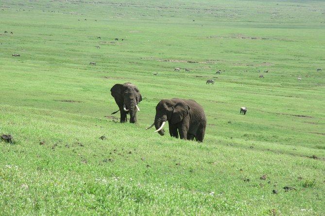 6 Days Luxury Lodge Big Five Safari to Tarangire Serengeti and Ngorongoro Crater