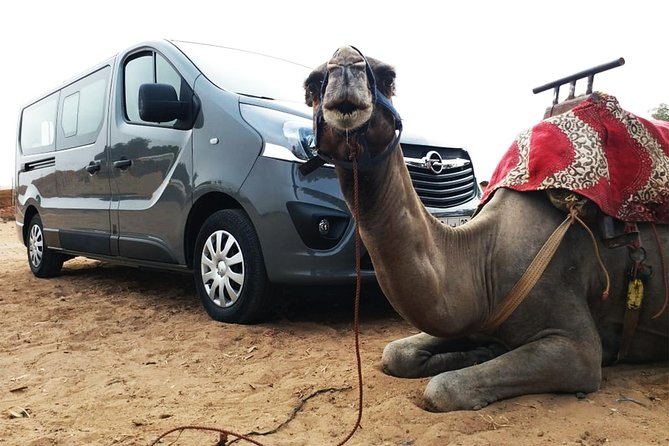Agadir Day Tour with Camel Ride Experience