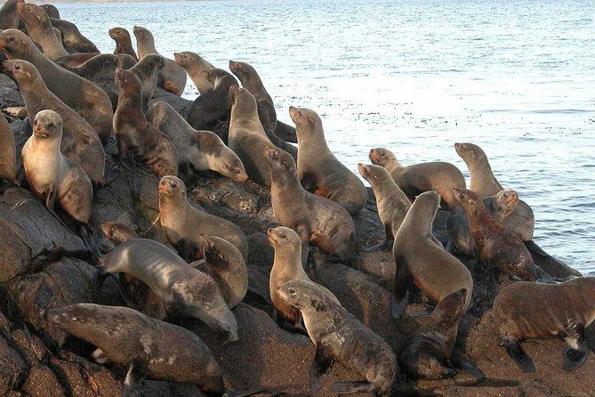 USHUAIA: Beagle Channel Navigation - Isla de los Lobos and Descent at Bridges Islands