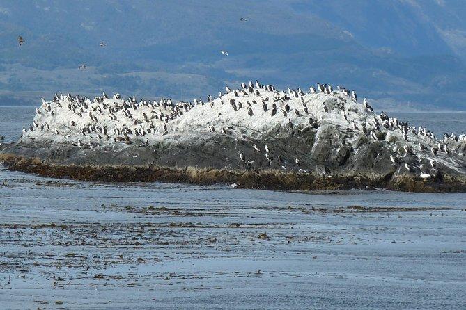 Ushuaia: Beagle Channel Navigation to the Pingüinera