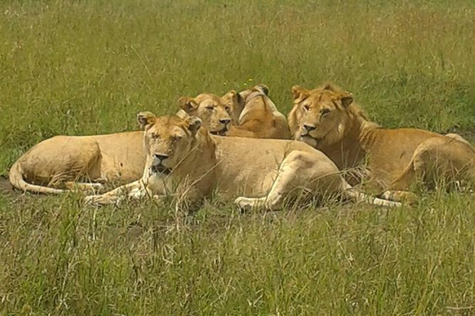 4 Days budget Camping Safari to see great Migration