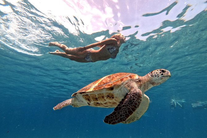 Flamingos and snorkeling with sea turtles