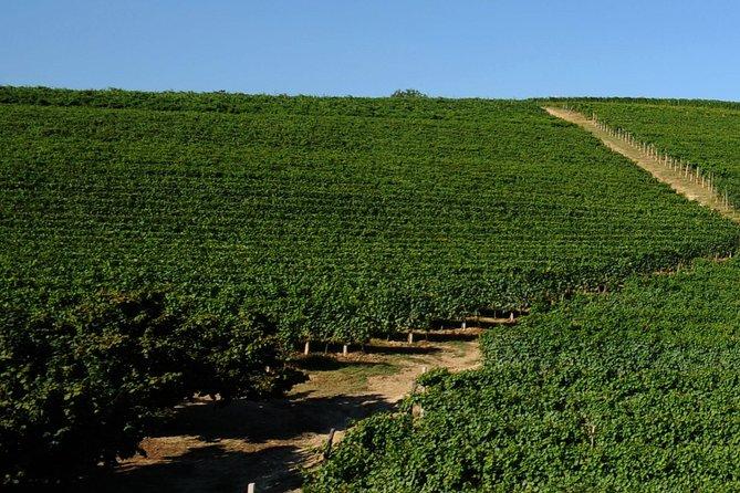 Langhe Wine & Hazelnuts