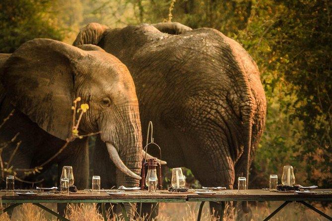 3 Days Safari - Mikumi National Park