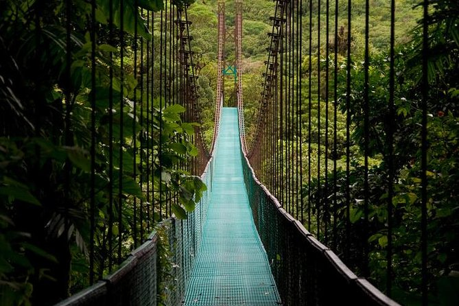 Hanging Bridges + Canopy Tour in the Monteverde Cloud Forest