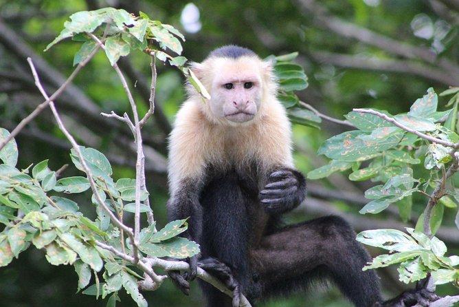 Wildlife Tour at Palo Verde National Park