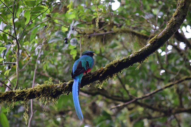 Birdwatching at Monteverde Cloud Forest Reserve
