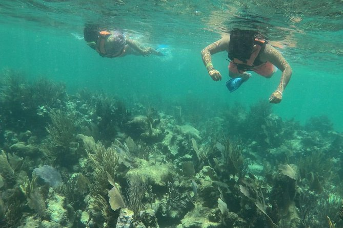 Costa Maya Tour Snorkel & Beach Adventure, Free transportation!