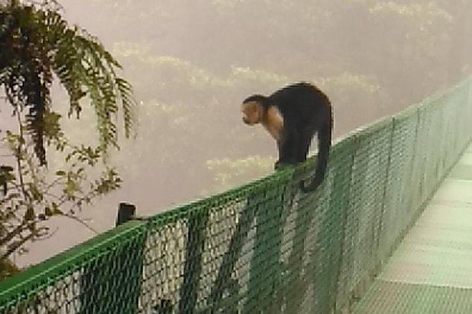 Hanging Bridges Guided Tour at Selvatura Park