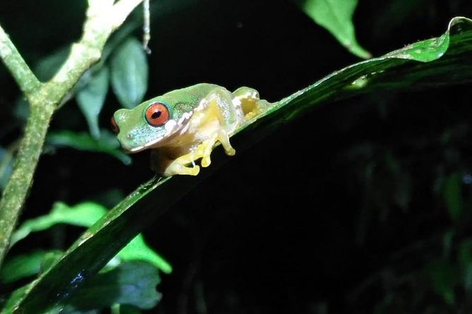 Night Walk Hike Guided Tour Monteverde (Entrance fees & Transport INCLUDED)