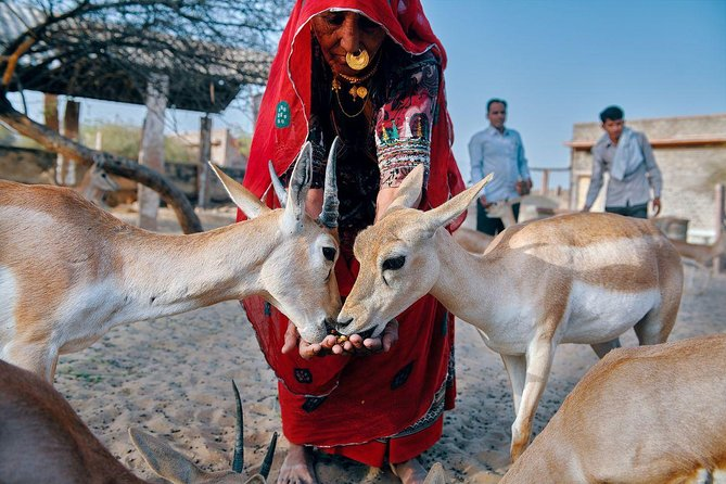 The Original - Bishnoi Safari and Village Experience