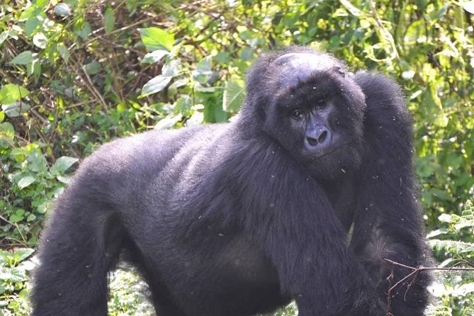 3 Days Uganda Gorilla Tracking Safari