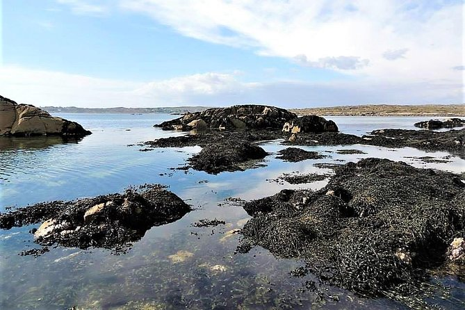 Abalone farm tour and tasting with coastal seaweed walk. Guided. 2 hours