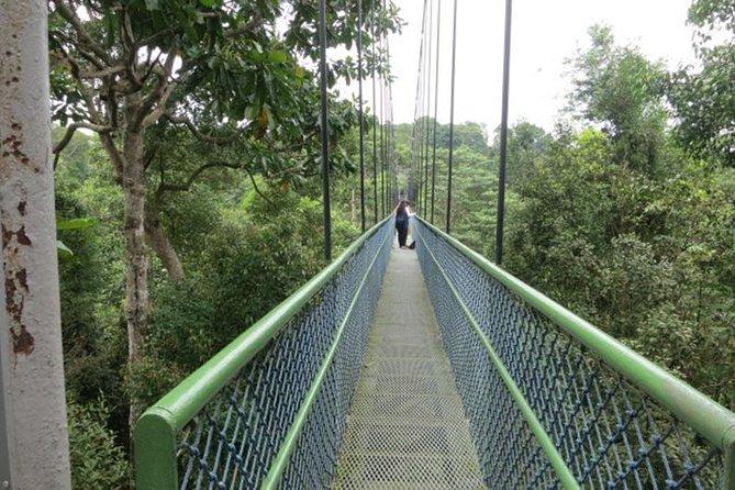 TreeTop Walk at MacRitchie Reservoir