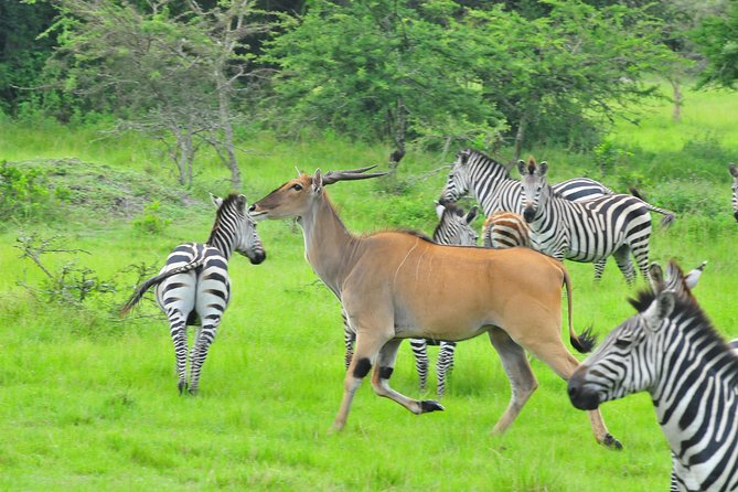 2 Days Lake Mburo Photographic Safari