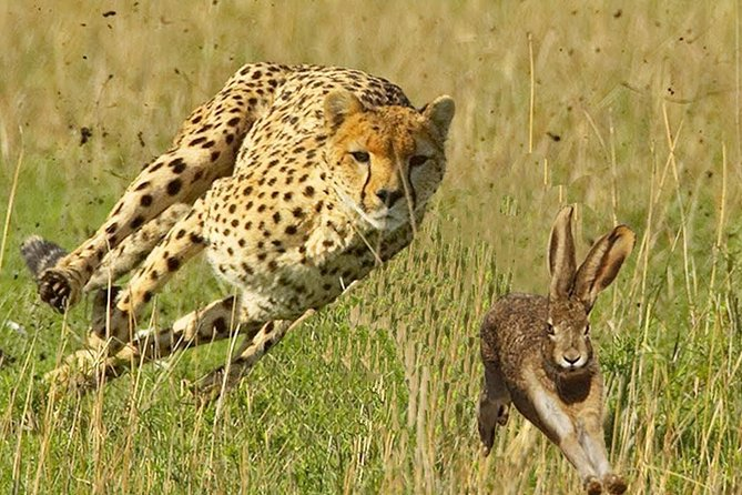 4 Day Private camping Safari in Serengeti,Ngorongoro and Lake Manyara