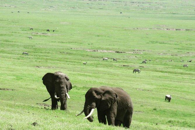 5days Amazing Tanzania safari