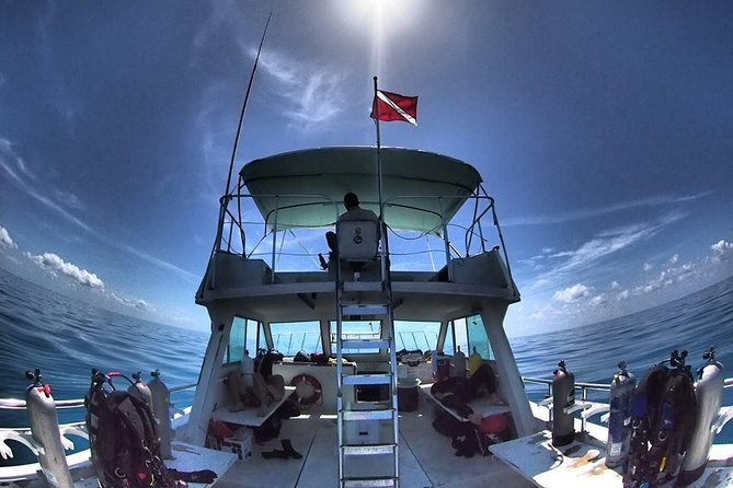 Guided Boat Diving Experience