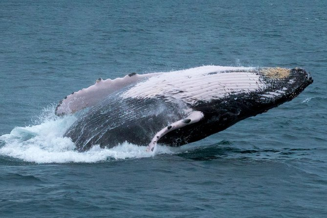 Whale Watching + Beach + Seafood Dinner - BEST VALUE IN PANAMA