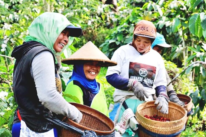 Malang Insider Tour: Java Coffee Plantation