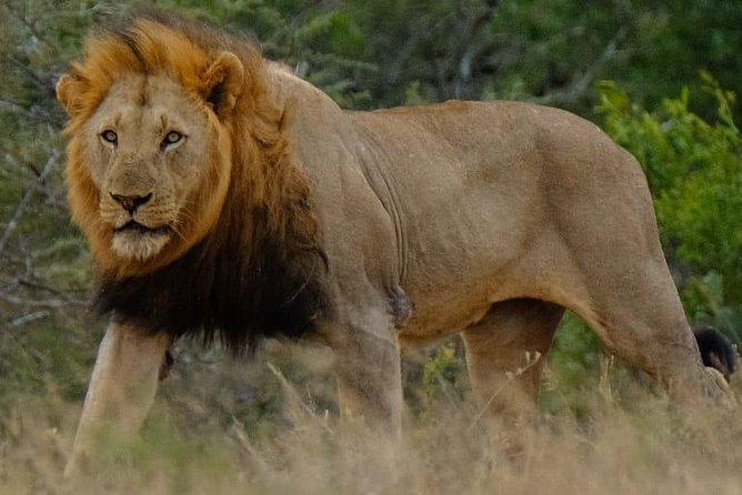 Hluhluwe Imfolozi Park Day Safari
