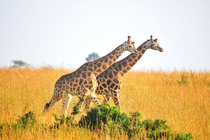 2 Days Murchison Falls Photographic Safari