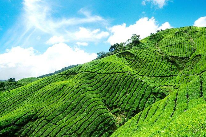6 Days Sri Lanka Private Heritage Tour
