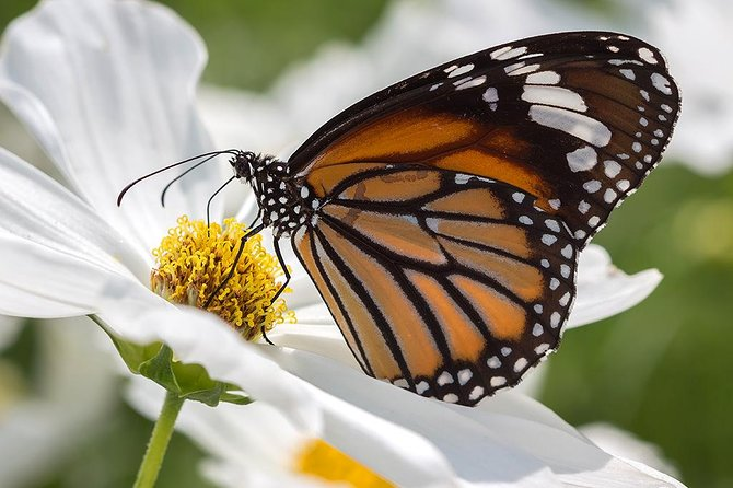 Pattaya Schmetterlingsgarten