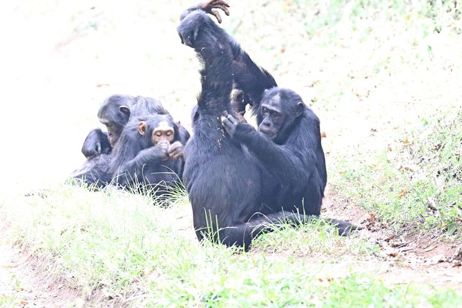 8 days Purely Primates Tour in Uganda