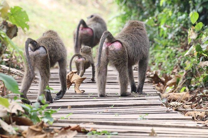 8 days Purely Primates Tour in Uganda