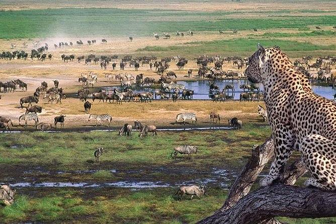 5days 4nights Unforgettable Tanzania Safaris photo 1