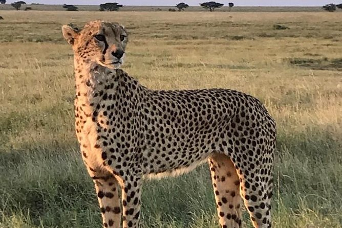 5days 4nights Unforgettable Tanzania Safaris photo 3