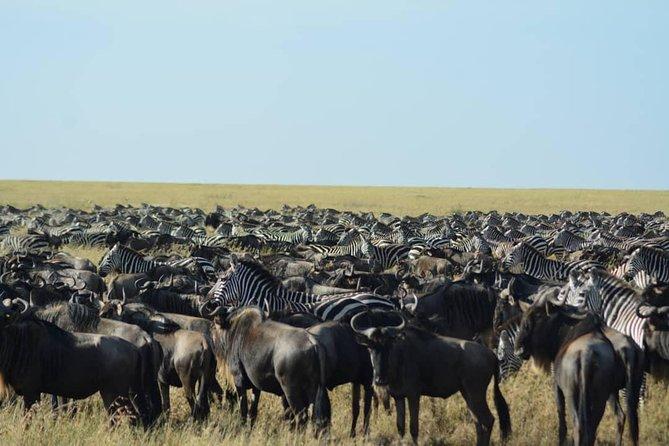 9 Days Tanzania and Kenya Spectacular Wildebeest Migration Safari