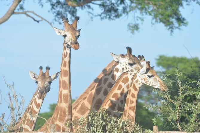 3 Day Big Five Photographic Tour - Murchison Falls National Park