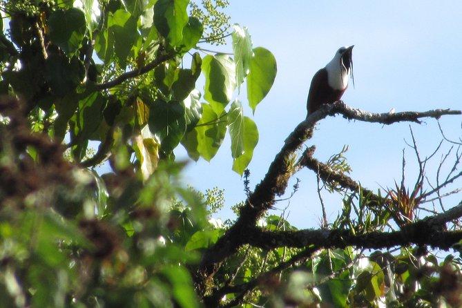 Walking in the cloud forest of Monteverde