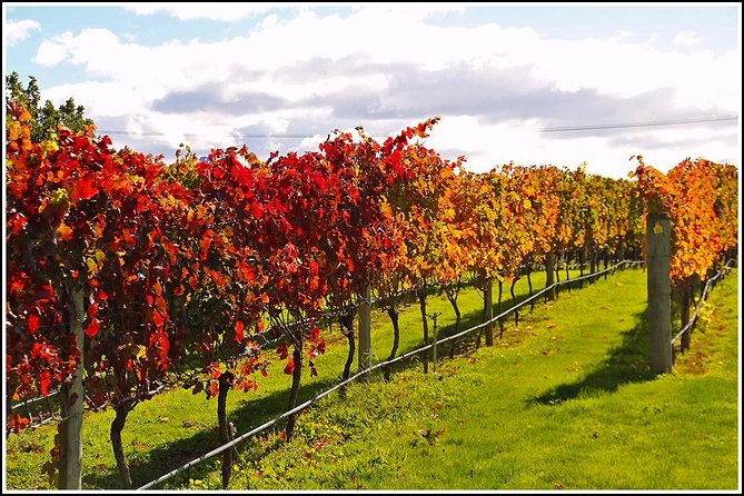 Wine and Beer Tour in Napier: .... 5 - 6 hours photo 8