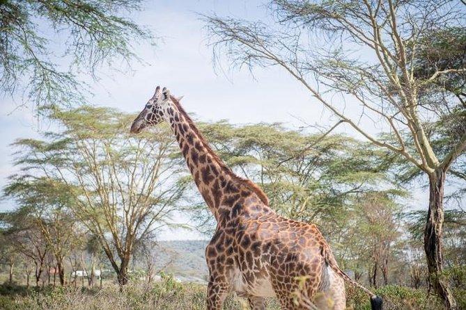 Half Day Giraffe Center Nairobi