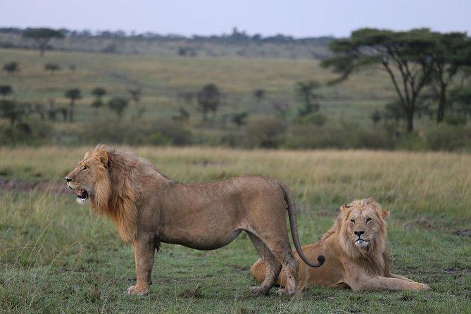 6 Days Masai Mara,Lake Nakuru&Amboseli Safari