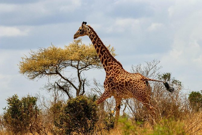 3 Days 2 Nights Tsavo East Taita Hills Game Sanctuary on Stilts photo 2