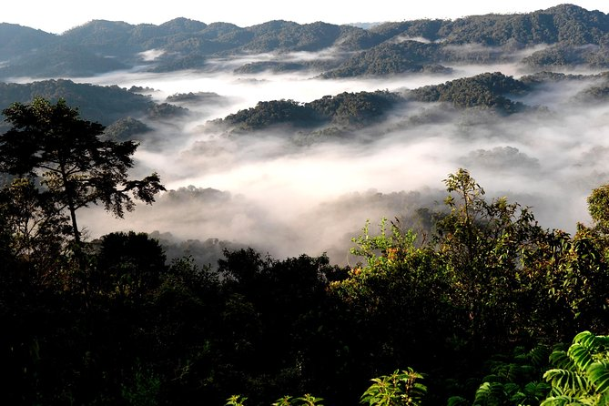 1 Day Hiking The Mountains Bisoke And/Or Gahinga or Golden Monkey Trekking
