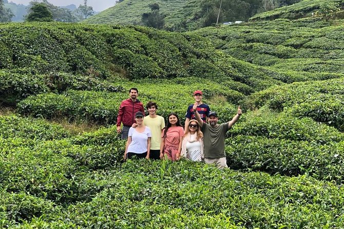 Lush Cameron Highlands Tour photo 1