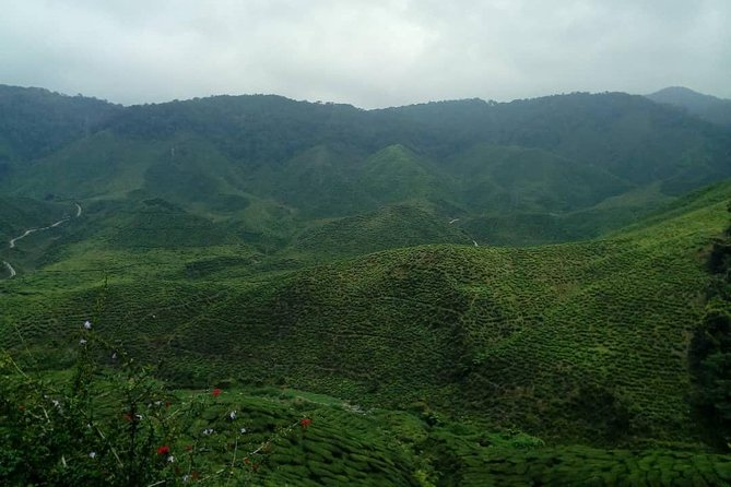 Lush Cameron Highlands Tour photo 5