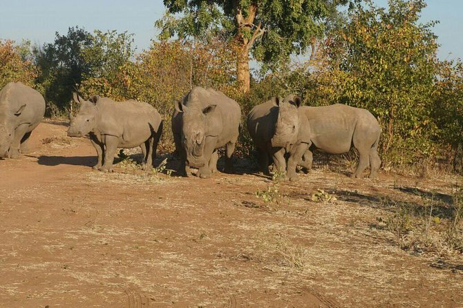 Long Rhino walk photo 45