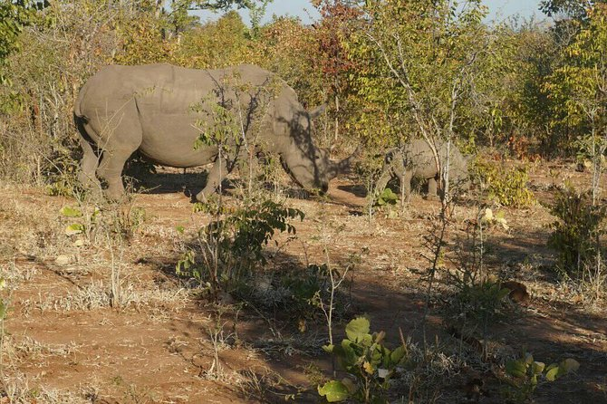 Long Rhino walk photo 31