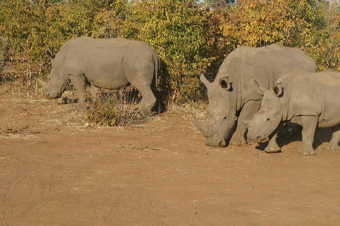 Long Rhino walk photo 46