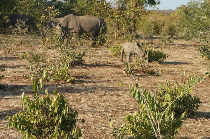 Long Rhino walk photo 41