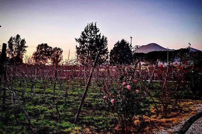 Food&Wine Pairing Dinner + Tour of the vineyards
