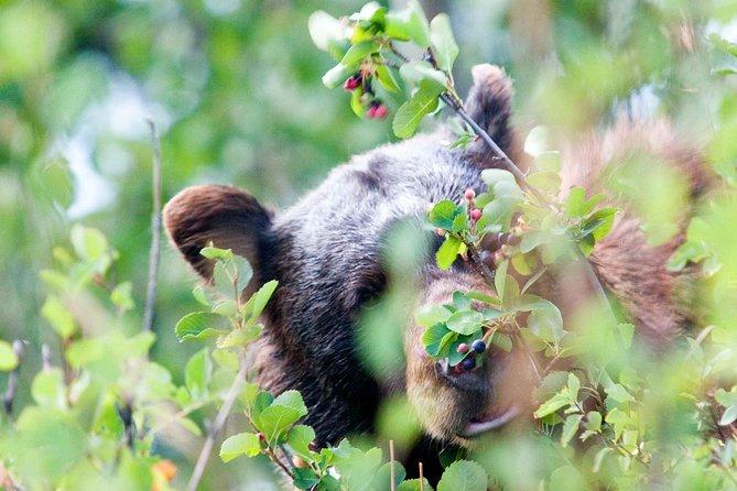 2-Day Bear and Wolf Safari Tour